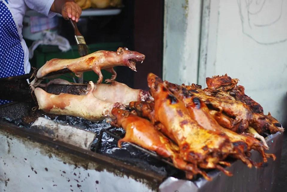 Жареные морские свинки, Южная Америка