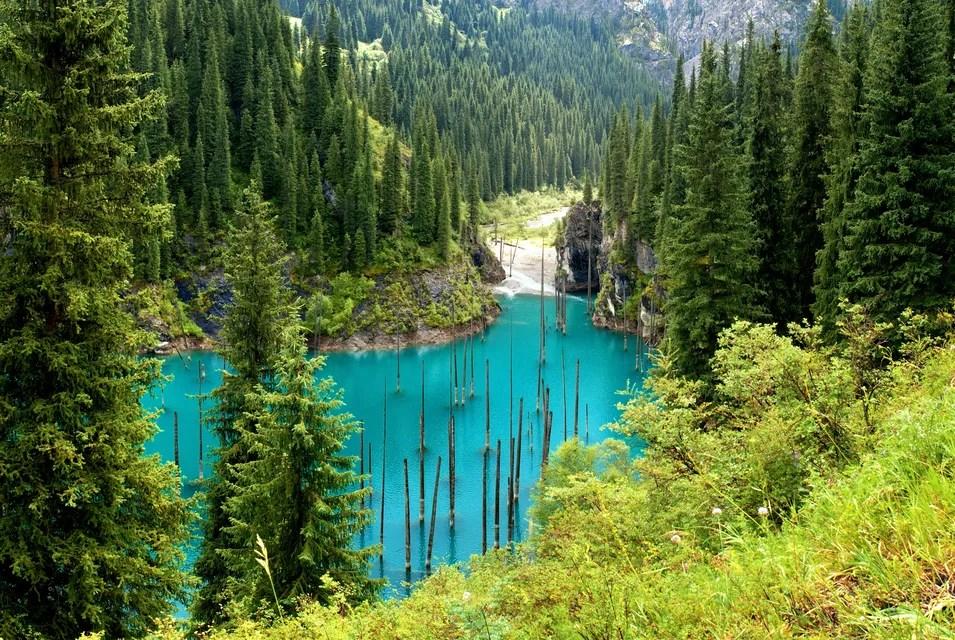 Oversvømmet skog - vakre Lake Cains i Kasakhstan