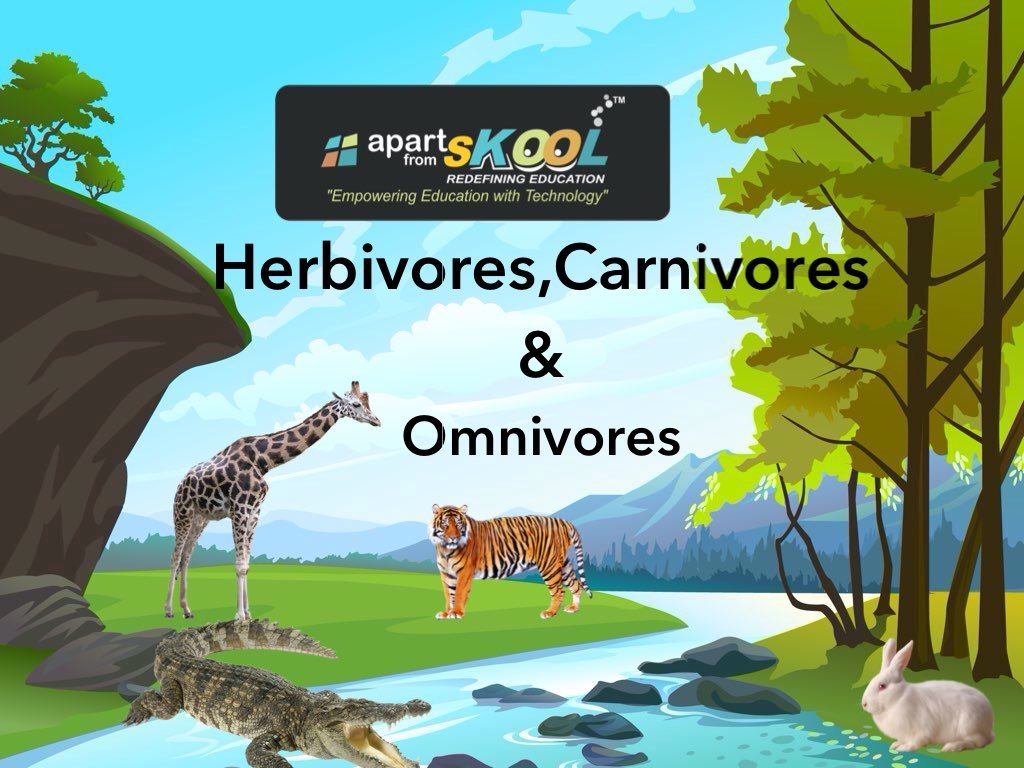 Carnivore And Omnivore Animals