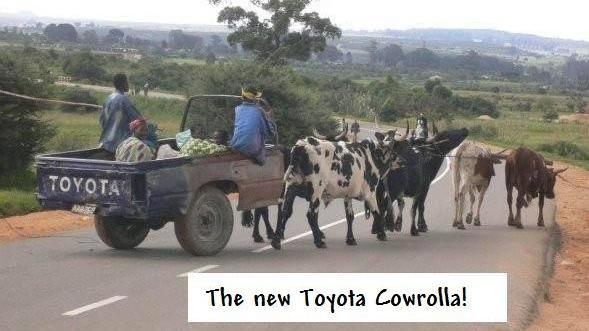 ¡El nuevo Toyota Cowrolla!