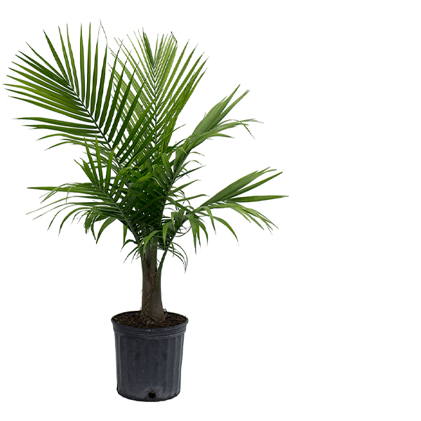 Indoor Plants The Home Depot