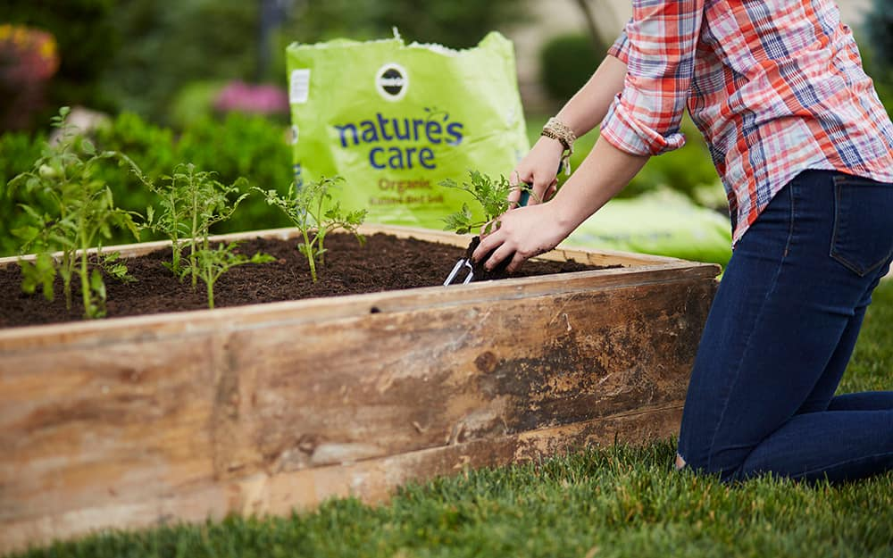 How To Start A Vegetable Garden The Home Depot