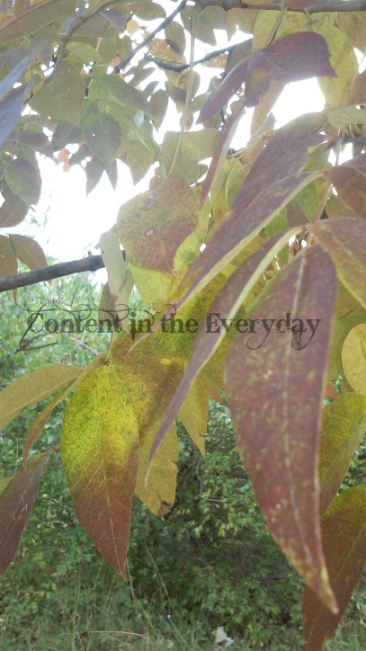 changing-leaves