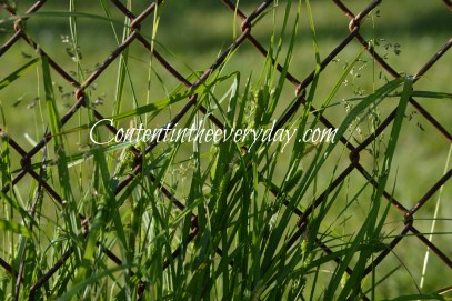 Grass in front of fence