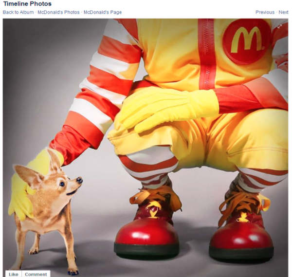 mcdonalds clown petting chihuahua