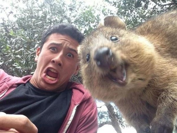 quokka-selfie