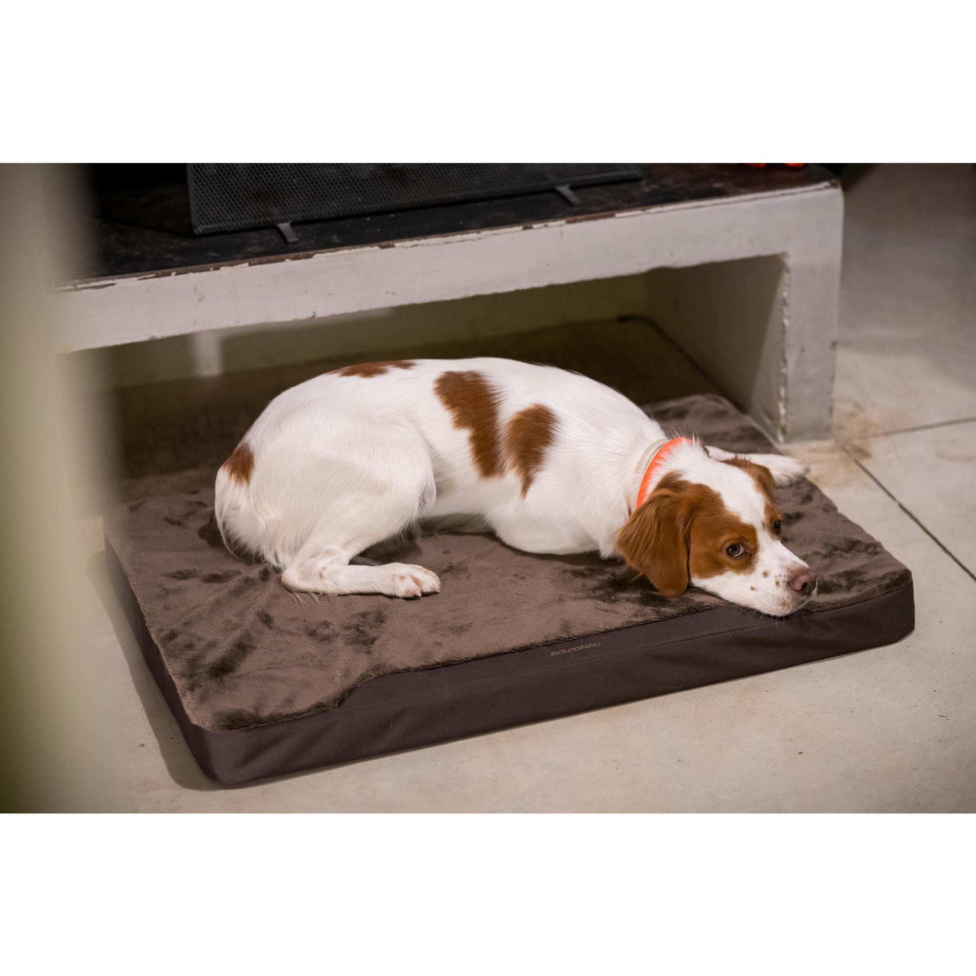 tapis chien 900 marron