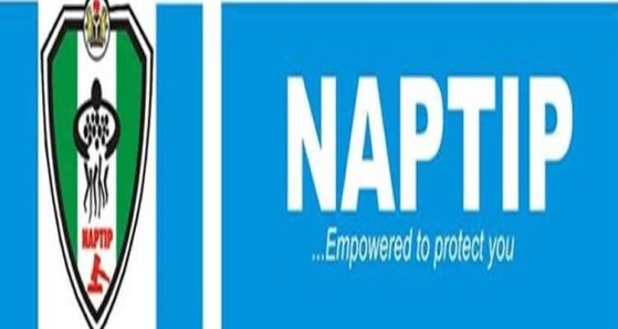 NAPTIP offices