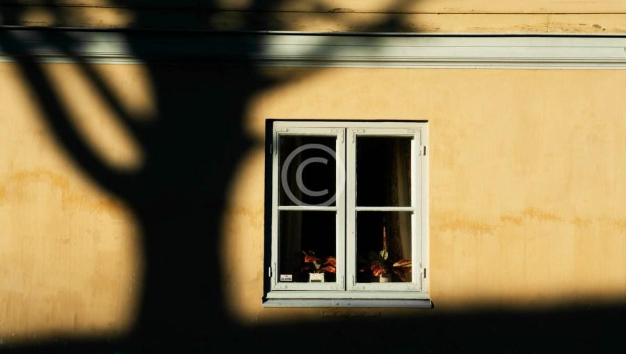Treskygge ved vindu