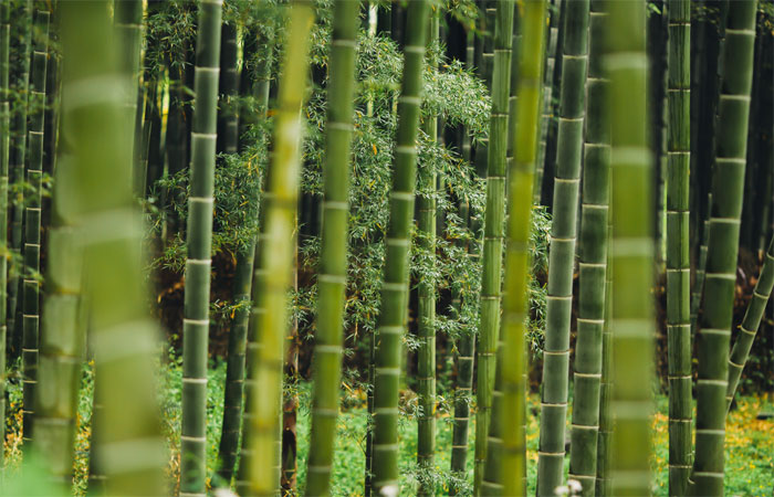 What is Bamboo? Indian Bamboo Products