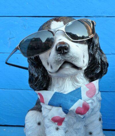 animal, dog, sunglasses