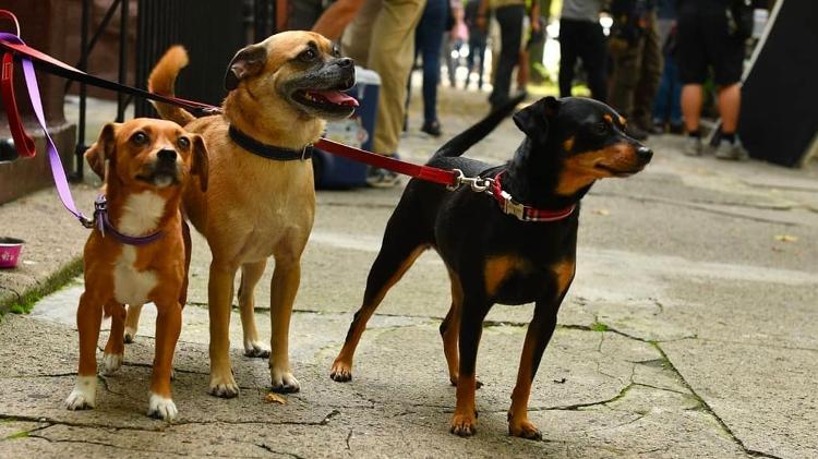 """Os amiguinhos de Bruno (centro), a cachorrinha Bella (esq.) e o Angie (dir.), da série """"It's Bruno"""", da Netflix - Divulgação - Divulgação"""