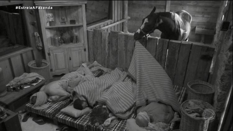 The Farm 2021: Horse wakes up the stall's pawns - Play/PlayPlus - Play/PlayPlus