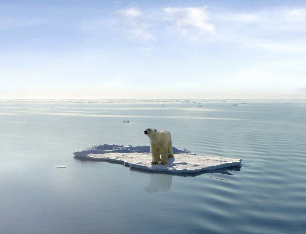 Resultado de imagem para urso polar