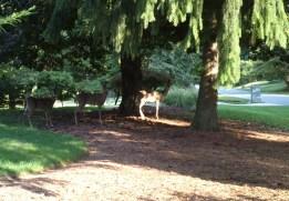 deer school