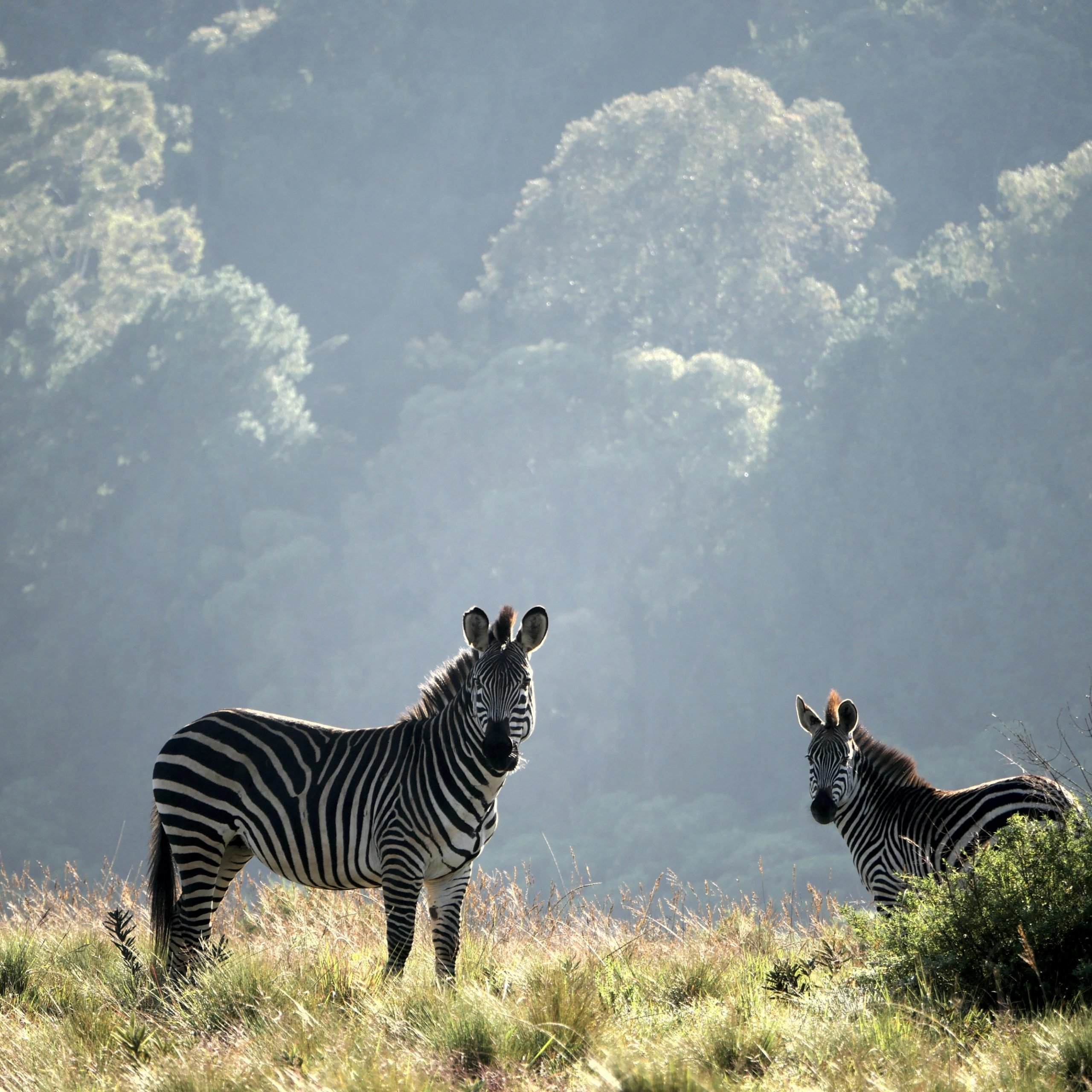 Arusha-Tarangire National Park