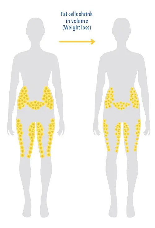 Fat Reduction vs. Weight Loss
