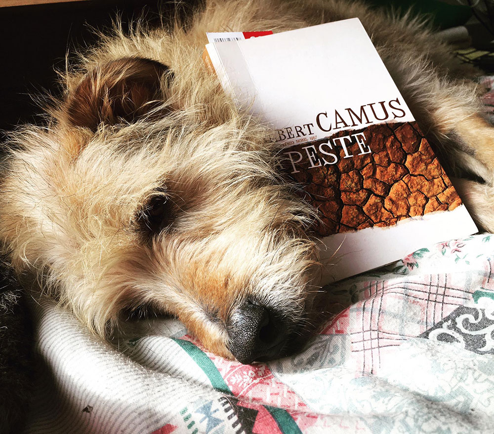 A Peste, de Albert Camus