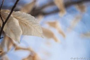 20140302-_MG_0118