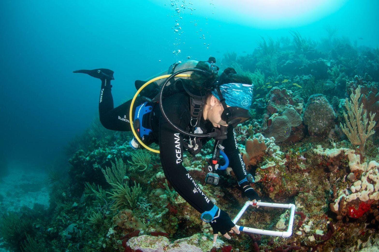Buzó explorando un arrecife de coral
