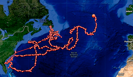 Shark's year of travel