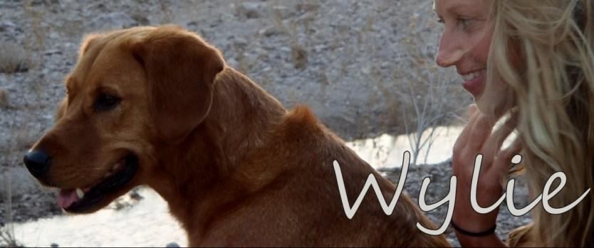 Wylie_Bio