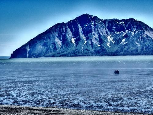 Our Alaskan Backyard: Another Photo Tour