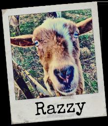 Razzle_220_256