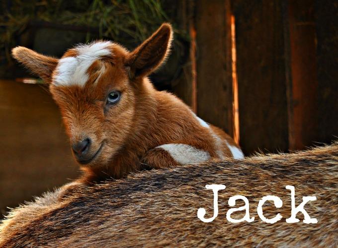 Jack_Text