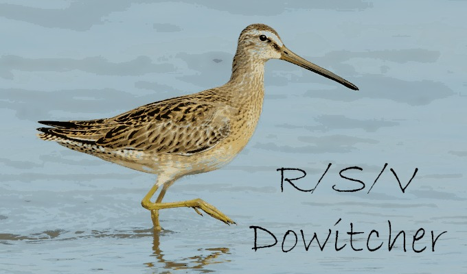 ShortbilledDowitcher_text