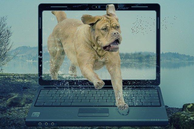 manipulation, pop out, dog