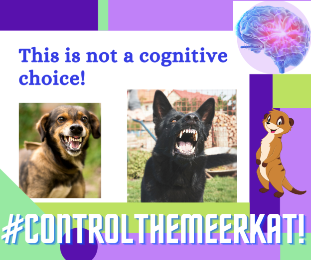 Image shows a white background with purple and green blocks. there's a brain at the top right and an animated Meerkat to the right. The main pictures are of two dogs showing their teeth. A small bringle dog with floppy ears an a large black german shepherd. The title says 'This is not a cognitive choice' #ControlTheMeerkat