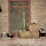 How farming and faith relate