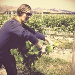 How I got fired from a New Zealand vineyard