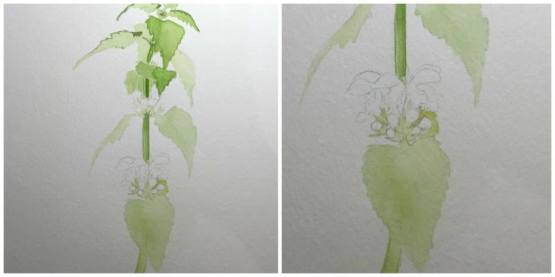Blätter malen in Aquarell –Techniken und Anwendungsbeispiele, Taubnessel in Aquarell