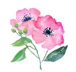 Flower3 300px