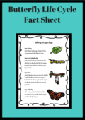 Butterfly life cycle fact sheet