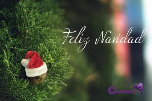 navidad y candidiasis 2