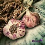 El ajo y sus propiedades antifúngicas