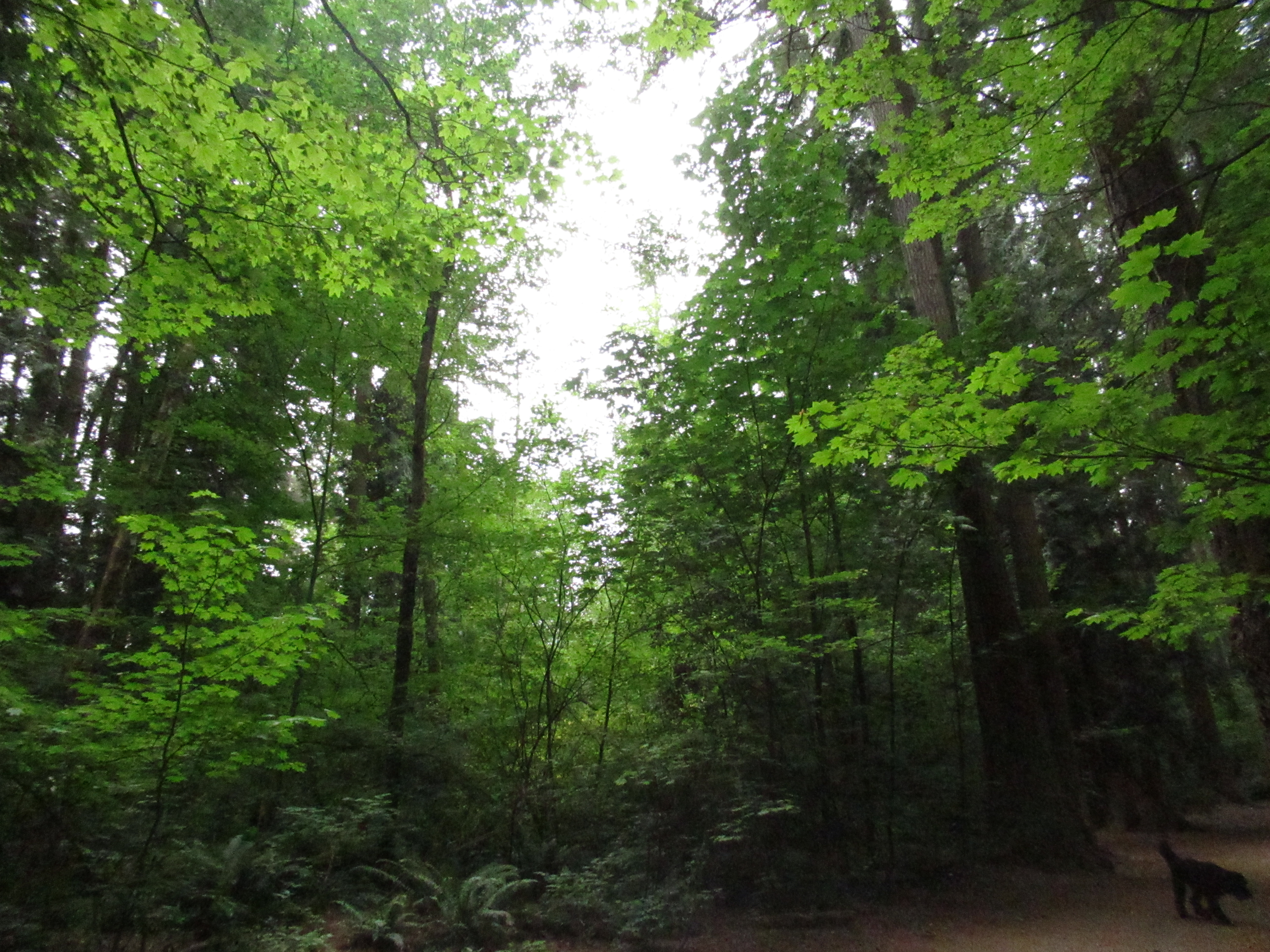 Roots of our identity as Christians - CCR dogwood forest 1