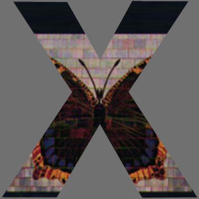 CoverX2161