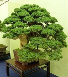 Creative Bonsai Trees Gardening Ideas For Backyard 02