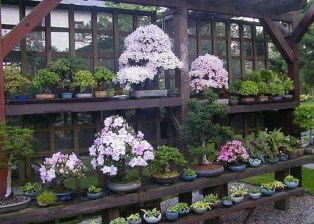 Creative Bonsai Trees Gardening Ideas For Backyard 05