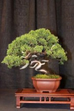 Creative Bonsai Trees Gardening Ideas For Backyard 06