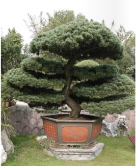 Creative Bonsai Trees Gardening Ideas For Backyard 09