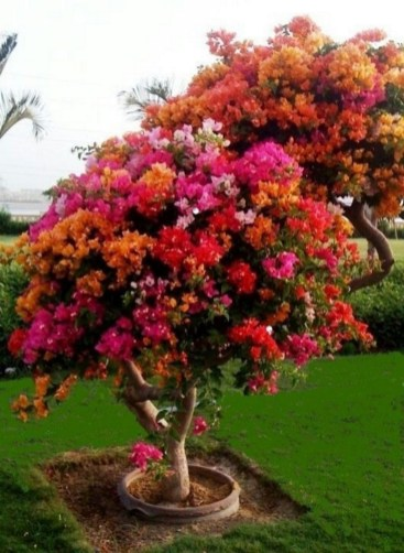 Creative Bonsai Trees Gardening Ideas For Backyard 18