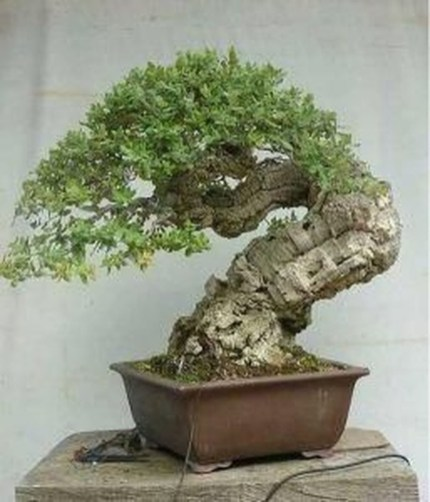 Creative Bonsai Trees Gardening Ideas For Backyard 21