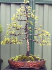 Creative Bonsai Trees Gardening Ideas For Backyard 26