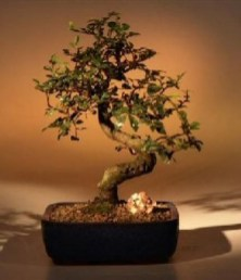 Creative Bonsai Trees Gardening Ideas For Backyard 33