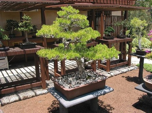 Creative Bonsai Trees Gardening Ideas For Backyard 38